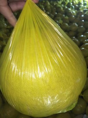 广西桂林永福县沙田柚 1.5斤以上