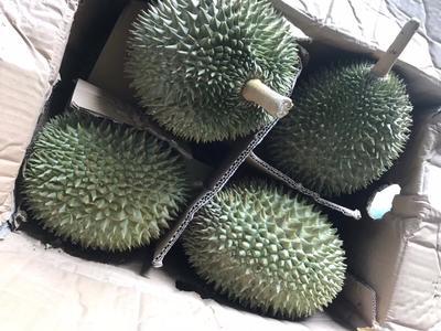 广西崇左凭祥市猫山王榴莲 80 - 90%以上 3 - 4公斤