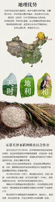 黑龙江哈尔滨五常市五常大米 有机大米 晚稻 一等品