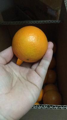 这是一张关于冰糖橙 55 - 60mm 4两以下 的产品图片