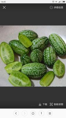 辽宁大连甘井子区拇指西瓜 有籽 1茬 7成熟 1斤打底