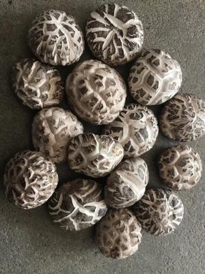 这是一张关于花菇干 散装 1年以上的产品图片