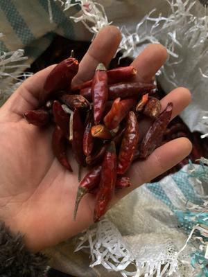 这是一张关于朝天椒 2~5cm 特辣的产品图片