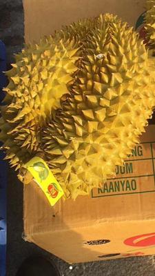 广东广州白云区金枕头榴莲 90%以上 3 - 4公斤