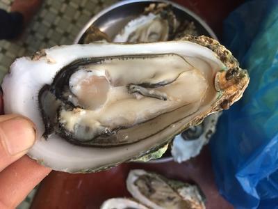 广东惠州惠阳区惠州生蚝 人工殖养 1-3只/公斤