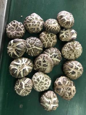 江西省上饶市上饶县花菇 4.6 - 6.0 cm 特级
