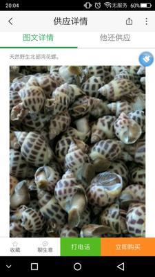 广西北海银海区玫瑰螺 野生 20-30只/公斤