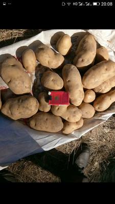 河北承德围场满族蒙古族自治县荷兰15号土豆 2两以上