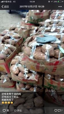 江苏扬州广陵区红心红薯 红皮 3两以上