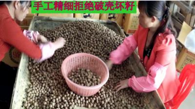 广西南宁马山县带壳桂圆 袋装 一等 带壳