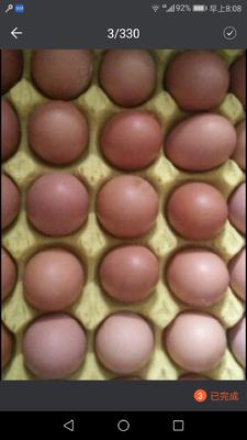 辽宁鞍山海城市普通鸡蛋 食用 箱装