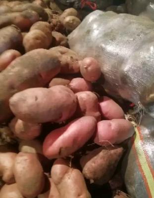 河南周口扶沟县荷兰14土豆 3两以上