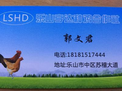 四川乐山市中区土鸡 统货 6月以下 2-3斤