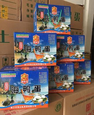 广西南宁西乡塘区海鸭蛋 食用 礼盒装
