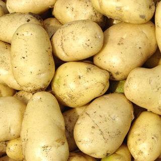 内蒙古乌兰察布察哈尔右翼中旗克新13土豆 统货