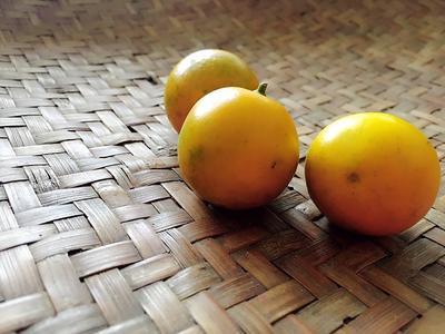 广西桂林全州县脆皮金桔 2-3cm 1两以下