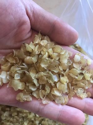 天津塘沽单荚皂角米