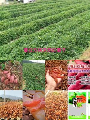 江西赣州安远县农家自制生地瓜干 条状 袋装 1年