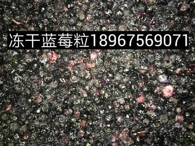 浙江绍兴诸暨市冻干蓝莓