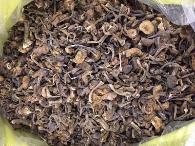 黑龙江牡丹江西安区蘑菇