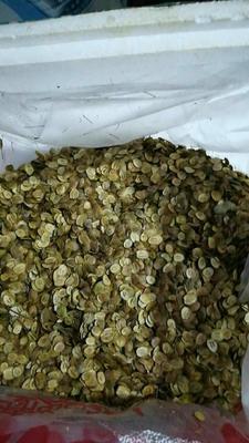 黑龙江省大兴安岭地区大兴安岭地区加格达奇区荠菜种子