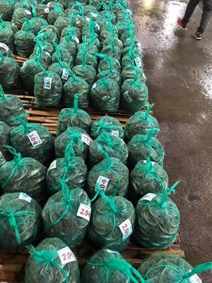 浙江杭州萧山区长荡湖大闸蟹 2.5-3.0两 公蟹