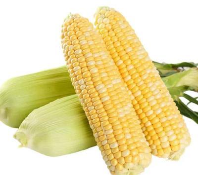 广东茂名化州市水果玉米 1% 鲜货