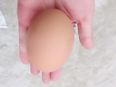 河南周口商水县五香变蛋