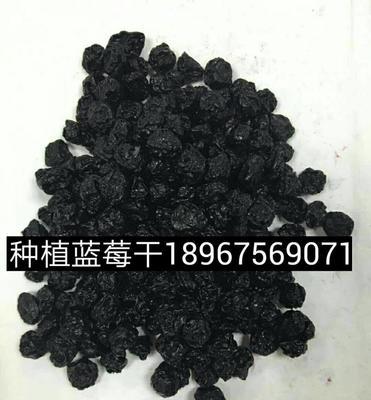 浙江绍兴诸暨市蓝莓