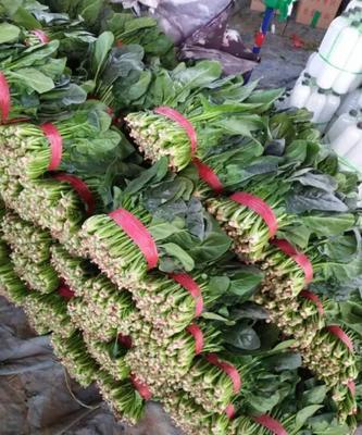 陕西西安高陵县长叶菠菜 20~25cm