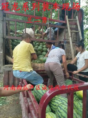 河南开封通许县冠龙西瓜 有籽 1茬 9成熟 10斤打底