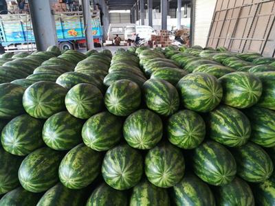 云南德宏瑞丽市缅甸西瓜 有籽 1茬 8成熟 15斤打底