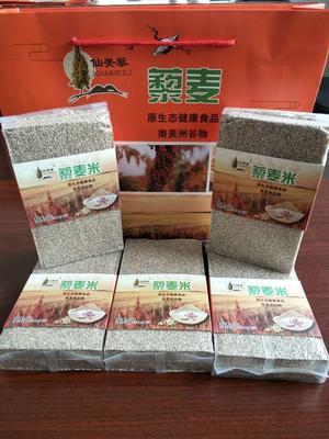 内蒙古包头东河区白藜麦