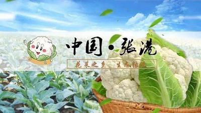 湖北天门天门市白花菜花 紧密 2~3斤 乳白