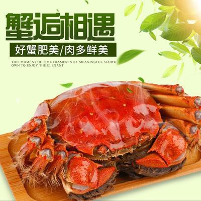 江苏泰州姜堰区生态大闸蟹 2.0-2.5两 统货