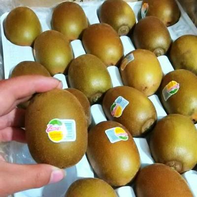 湖南湘西永顺县有机猕猴桃 70克以上