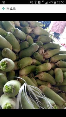 湖北襄樊襄州区青皮萝卜 0.2~1斤