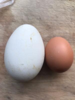 陕西铜川印台区土鹅蛋 食用 箱装