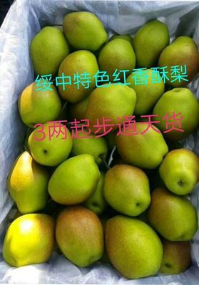 辽宁葫芦岛绥中县红香酥梨 60-100g 65mm以上