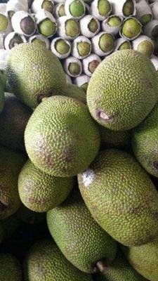 云南省红河哈尼族彝族自治州建水县海南菠萝蜜 10-15斤