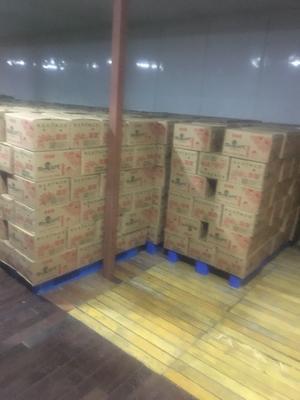 浙江杭州江干区烟薯25 红皮 4两以上