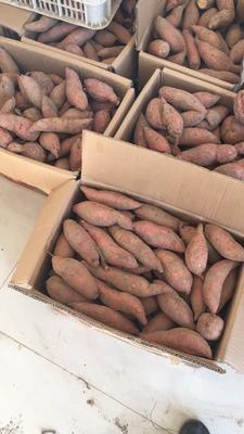 河北廊坊广阳区烟薯25 红皮 5两以上