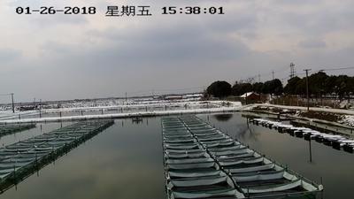 江苏无锡宜兴市苏州太湖大闸蟹 1.9两 母蟹