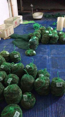江苏无锡宜兴市生态大闸蟹 2.0-2.5两 公蟹