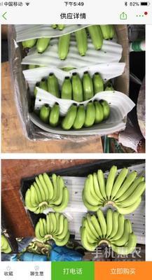 福建厦门集美区天宝蕉 七成熟 40 - 50斤