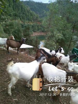 广东深圳龙岗区兔皮
