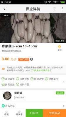 江苏淮安金湖县水果藕 9-11cm 20~25cm