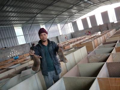 广东省佛山市南海区三红胡萝卜 10cm以下 2两以下 3~4cm
