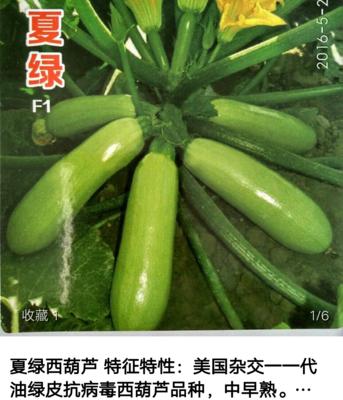 河南省商丘市睢阳区西葫芦种子
