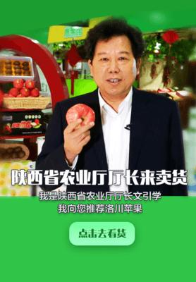 河南商丘虞城县冰糖心苹果 膜袋 片红 80mm以上